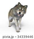 狼 イヌ科 動物のイラスト 34339446