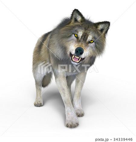 オオカミのイラスト素材 34339446 Pixta