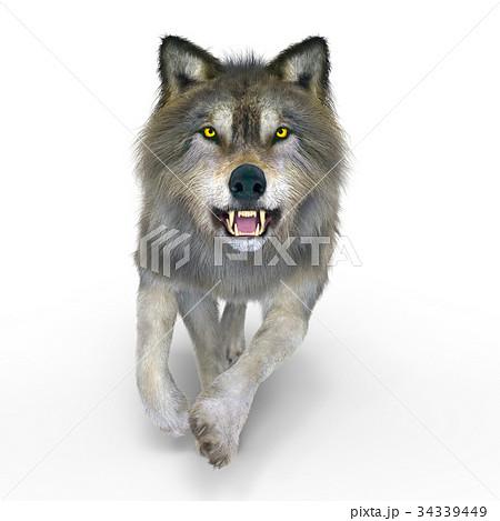 オオカミ 34339449