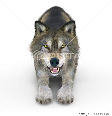 オオカミ 34339450