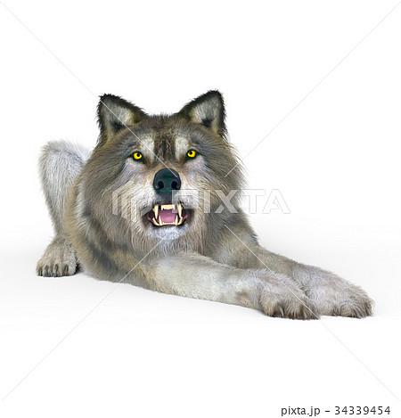 オオカミ 34339454