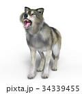 狼 イヌ科 動物のイラスト 34339455