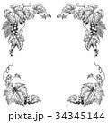 ぶどう ペン画 モノクロのイラスト 34345144