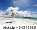 南国の美しいビーチで鍛える男性 34346939