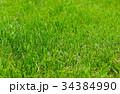 自然 牧草地 グリーンの写真 34384990