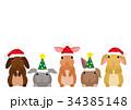 サンタの帽子をかぶったウサギたち 34385148