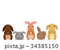 かわいいウサギのボーダー 34385150