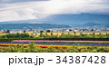ラベンダー畑 北海道 富良野の写真 34387428