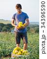 メロン 農家 収穫物の写真 34396590