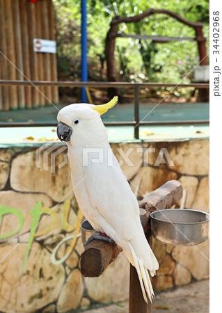 Macaw parrotの写真素材 [34402968] - PIXTA