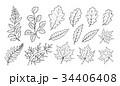 ラインアート 手描き 手描きののイラスト 34406408