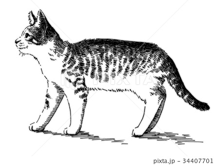 ボールペンで描いた猫のイラスト 34407701