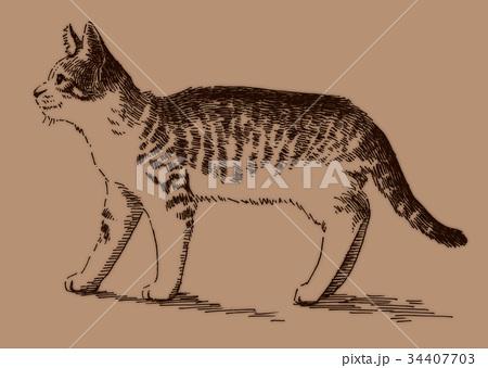 ボールペンで描いた猫のイラスト 34407703