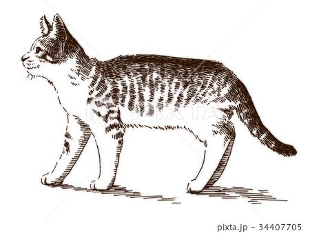 ボールペンで描いた猫のイラスト 34407705