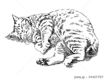 ボールペンで描いた猫のイラストのイラスト素材 34407707 Pixta