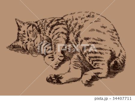 ボールペンで描いた猫のイラスト 34407711