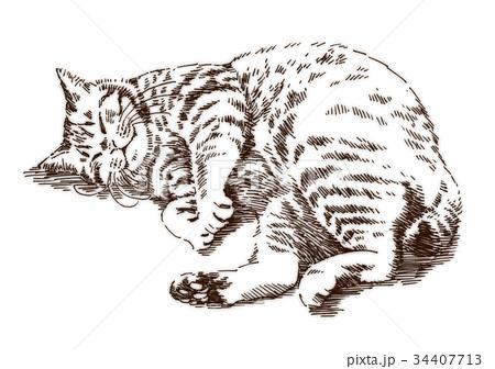 ボールペンで描いた猫のイラスト 34407713