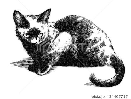ボールペンで描いた猫のイラスト 34407717