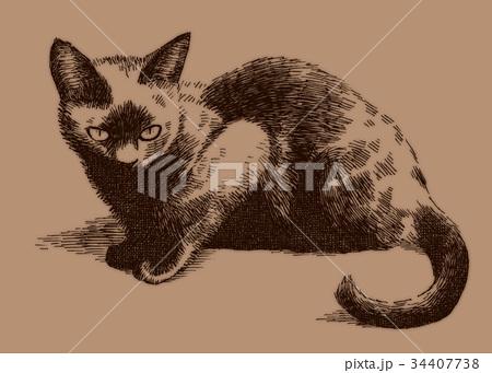 ボールペンで描いた猫のイラスト 34407738