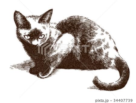 ボールペンで描いた猫のイラスト 34407739