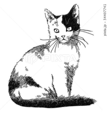 ボールペンで描いた猫のイラスト 34407741