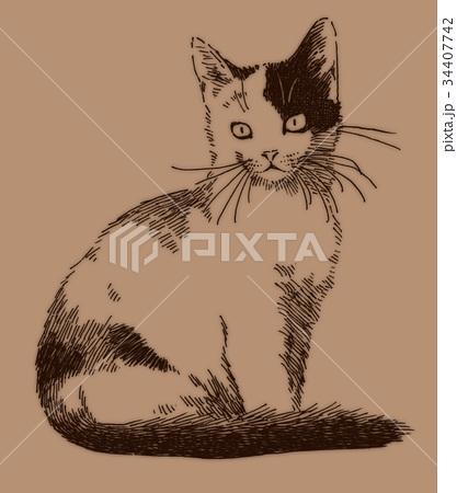 ボールペンで描いた猫のイラスト 34407742
