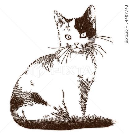 ボールペンで描いた猫のイラスト 34407743