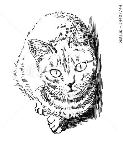 ボールペンで描いた猫のイラスト 34407744