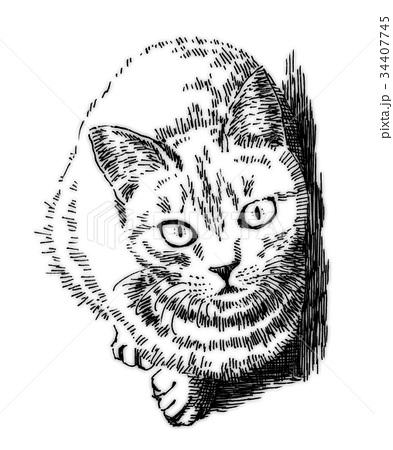 ボールペンで描いた猫のイラスト 34407745