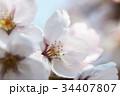 桜 花 春の写真 34407807
