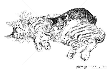 ボールペンで描いた猫のイラスト 34407832