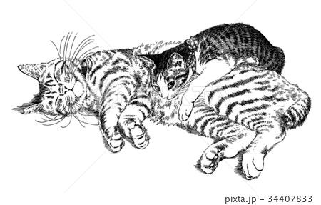 ボールペンで描いた猫のイラスト 34407833