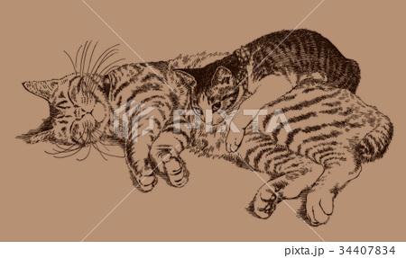 ボールペンで描いた猫のイラスト 34407834