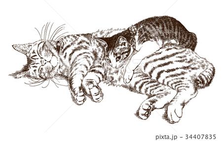 ボールペンで描いた猫のイラスト 34407835