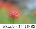 秋の花 一輪の彼岸花 34416462