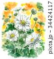 シュウメイギク 花 水彩のイラスト 34424117