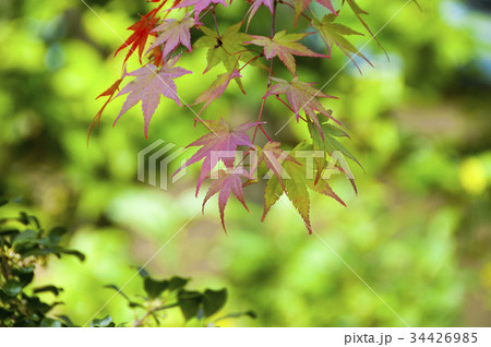 色とりどりの美しい紅葉 34426985