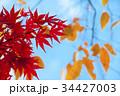 色とりどりの美しい紅葉 34427003