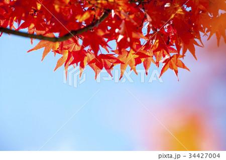 色とりどりの美しい紅葉 34427004