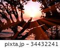 湖畔の日の出と犬のシルエット 34432241