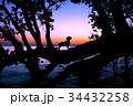 湖畔の夜明けと犬のシルエット 34432258
