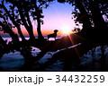 湖畔の夜明けと犬のシルエット 34432259