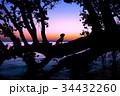 湖畔の夜明けと犬のシルエット 34432260