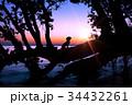 湖畔の夜明けと犬のシルエット 34432261