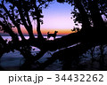 湖畔の夜明けと犬のシルエット 34432262