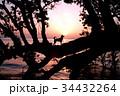 湖畔の夜明けと犬のシルエット 34432264