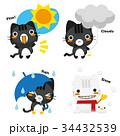 猫 黒トラ 天気予報のイラスト 34432539