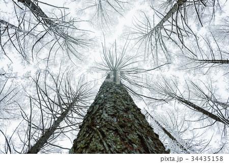 雪の森林、冬の風景。 34435158