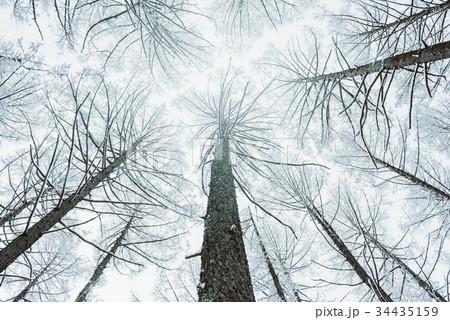 雪の森林、冬の風景。 34435159