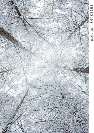 雪の森林、冬の風景。 34435161